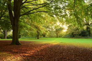 One of many great parks in which to meet your personal trainer in Ealing