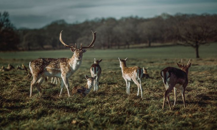 Deer in Richmond Park, a great place to meet your personal trainer in Richmond